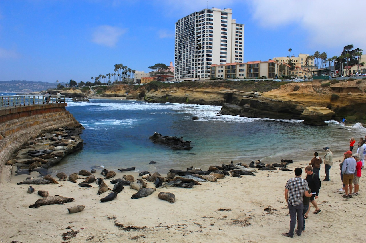 "La Jolla - a view from the ""Children Pool"" where you can see sea lions in the wild."