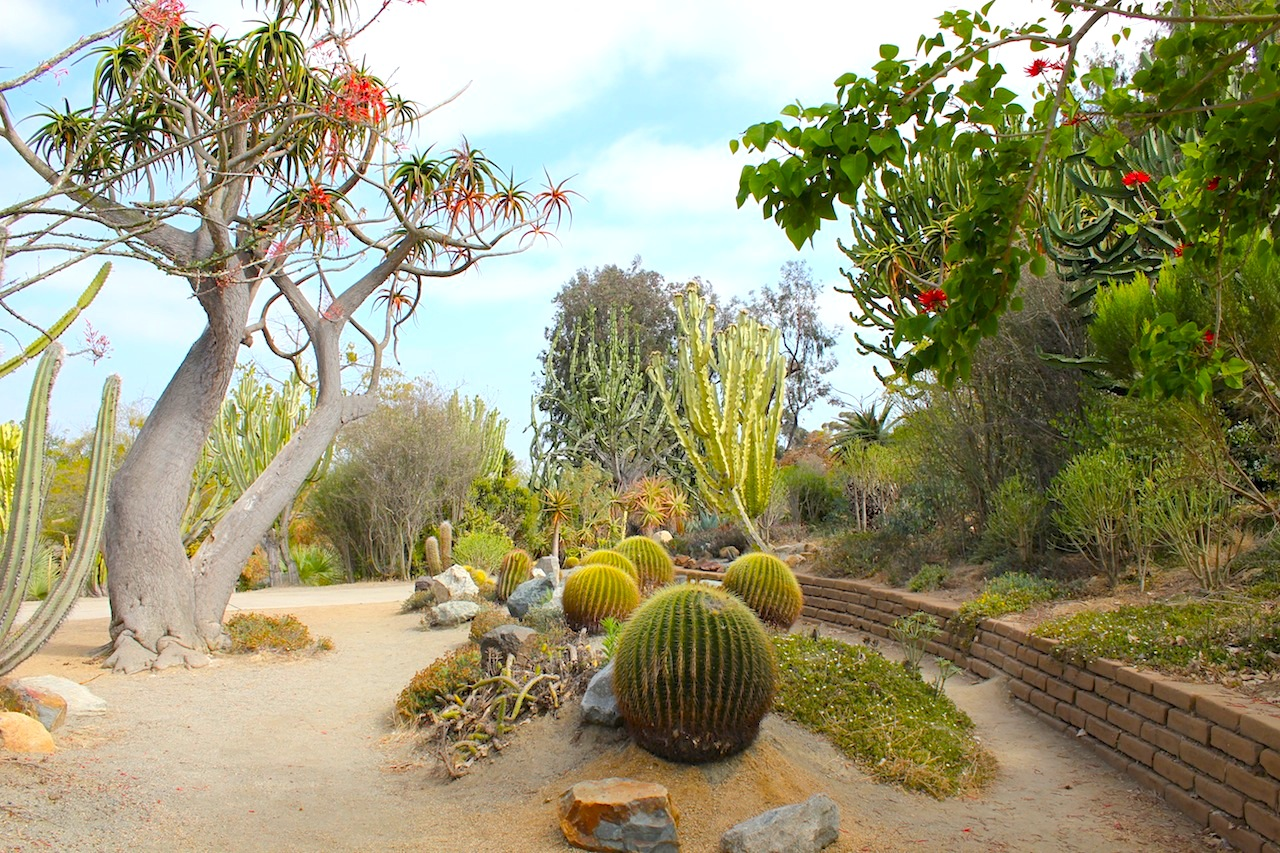 At the Desert Garden - the Balboa Park.